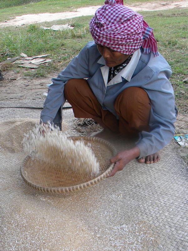 séchage du riz, Mékong, Cambodge