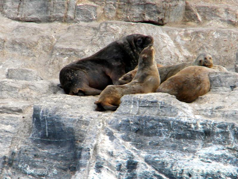 Famille de lions de mer