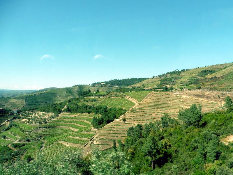 Paysage de vignobles