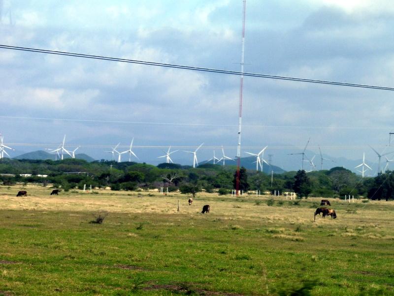 Vaches et éoliennes