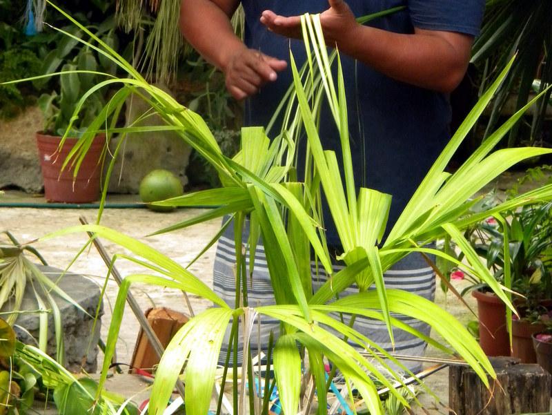 Les feuilles de palmier