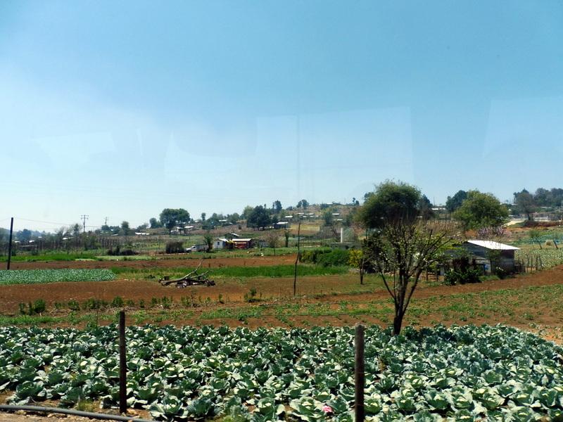 Jardins potagers
