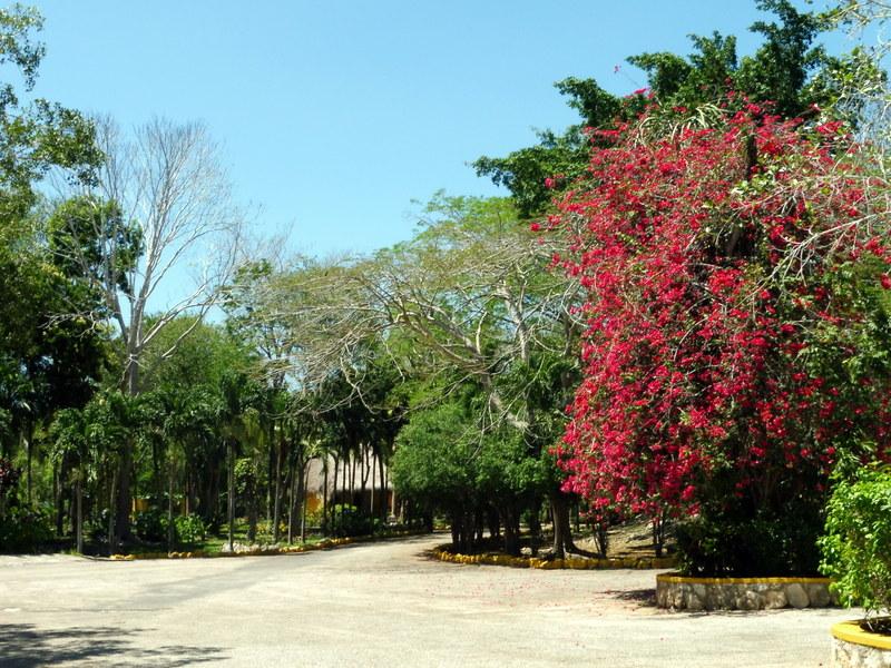 Le jardin botanique (2)