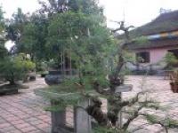 jardin bonzai.jpg