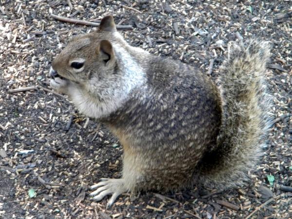 Un bel écureuil
