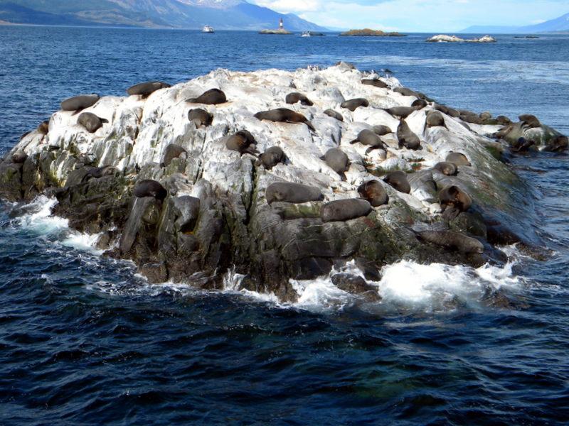 L'île de Los Lobos