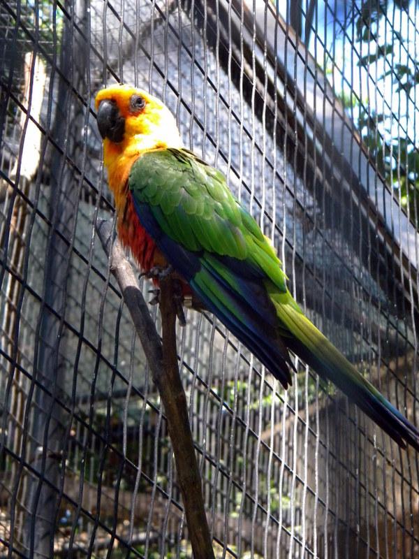 Perroquet-6