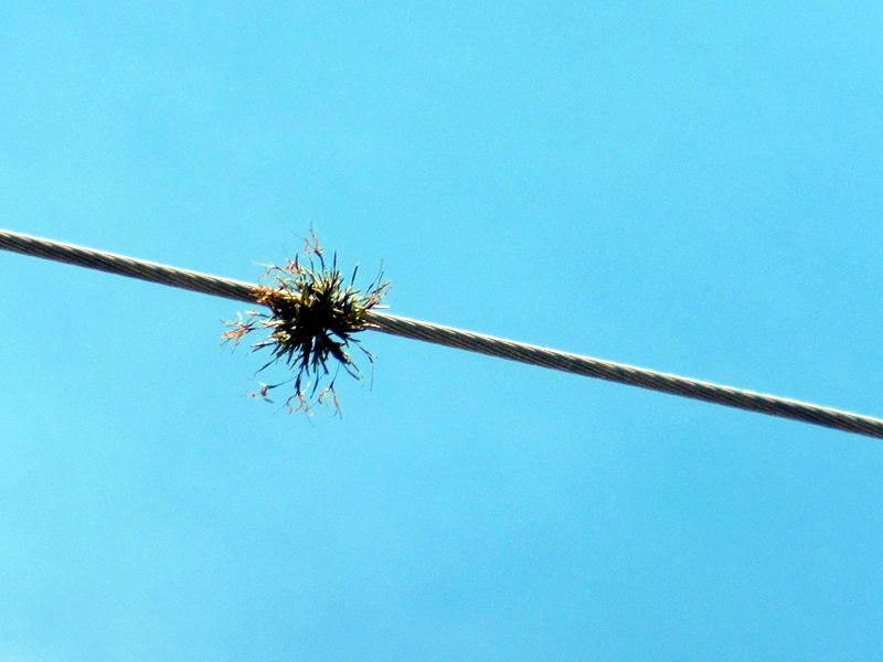 Nid de passereau sur un fil électrique
