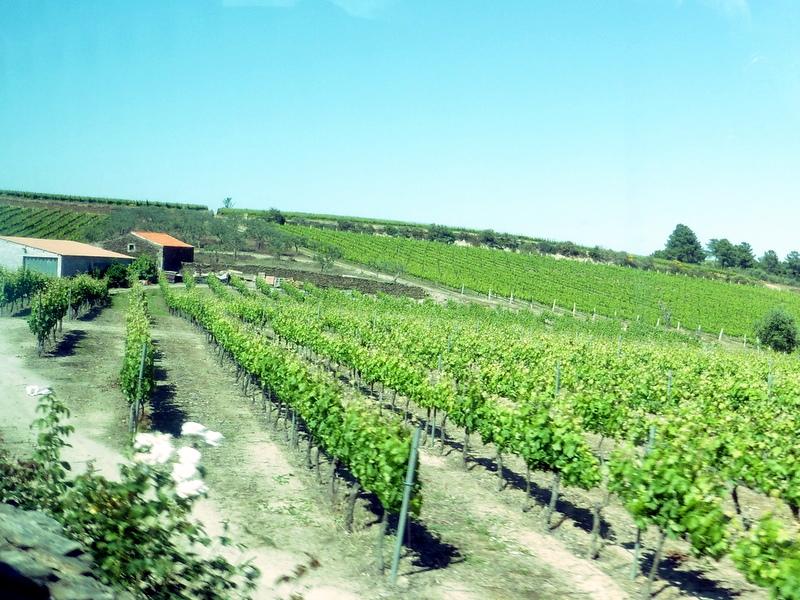 Vignoble de Porto