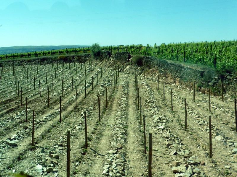 Une terre sèche et caillouteuse