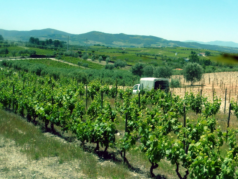 Le vignoble de la quinta
