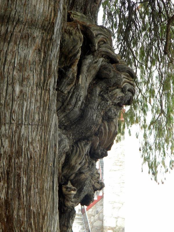 Étranges figures sur le tronc