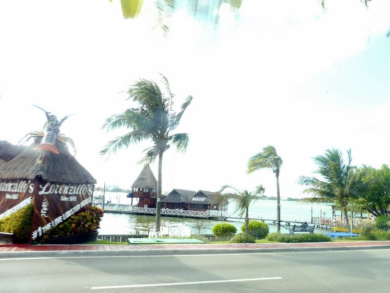La mer et les palmiers