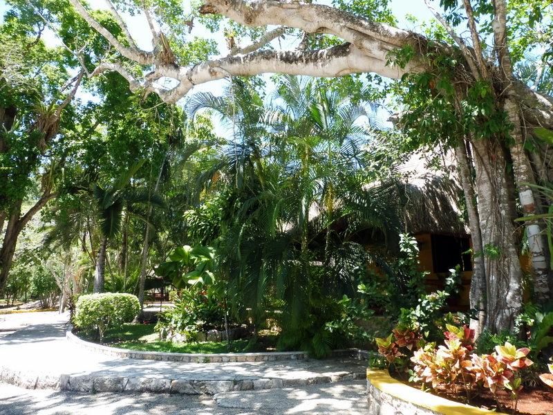 Le jardin botanique (1)
