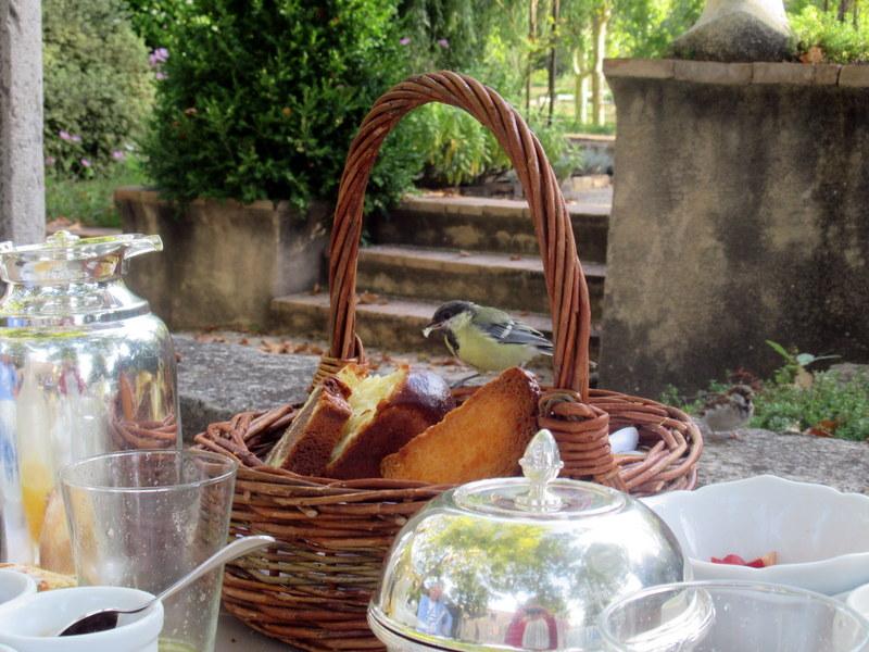 Forcalquier, petit déjeuner, mésange charbonnière