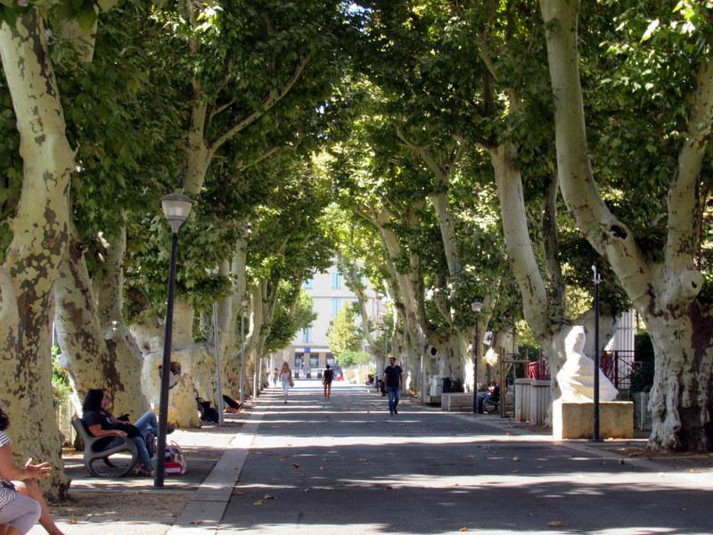 Digne, avenue bordée de magnifiques platanes